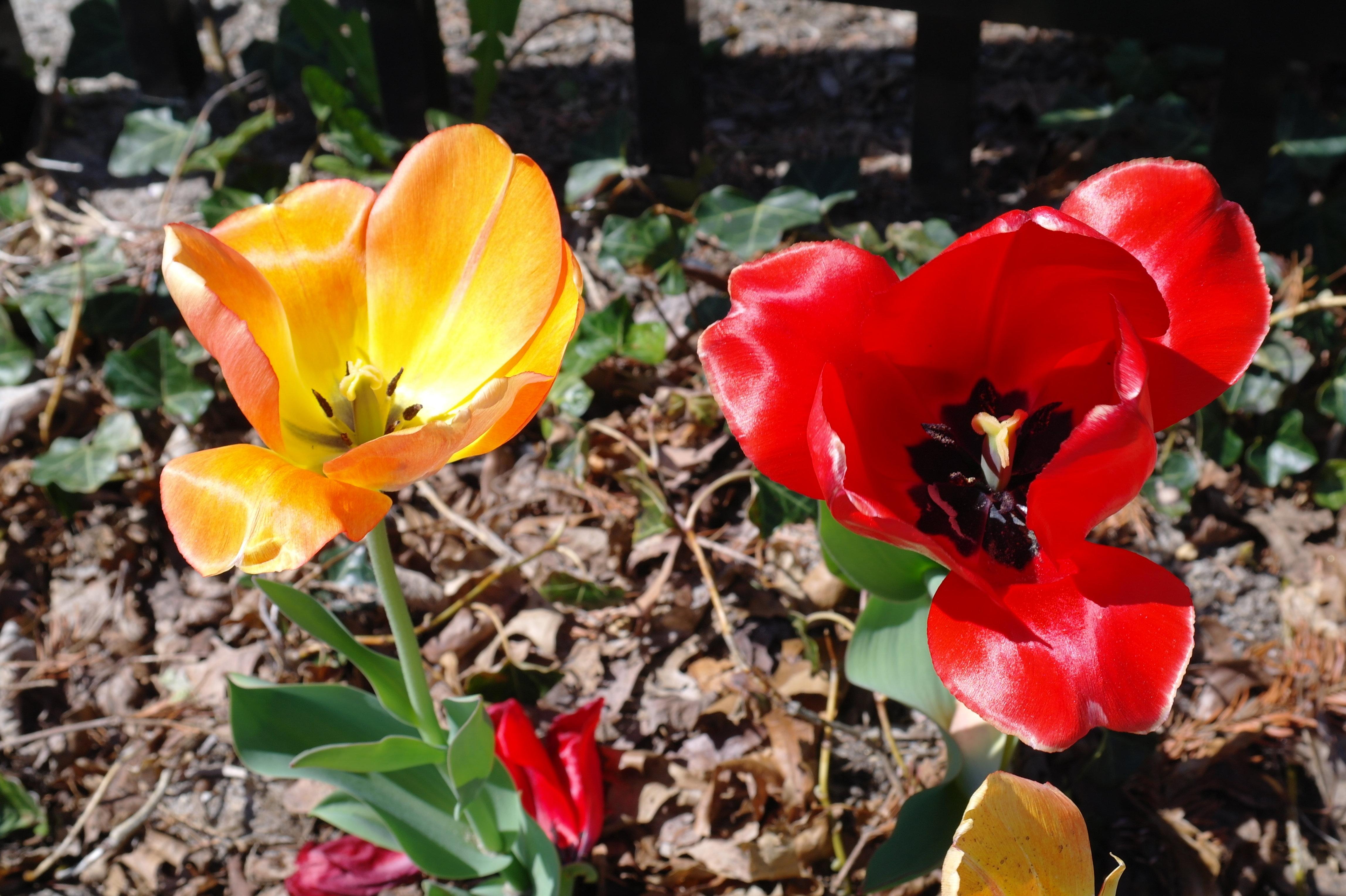 Floral Sample