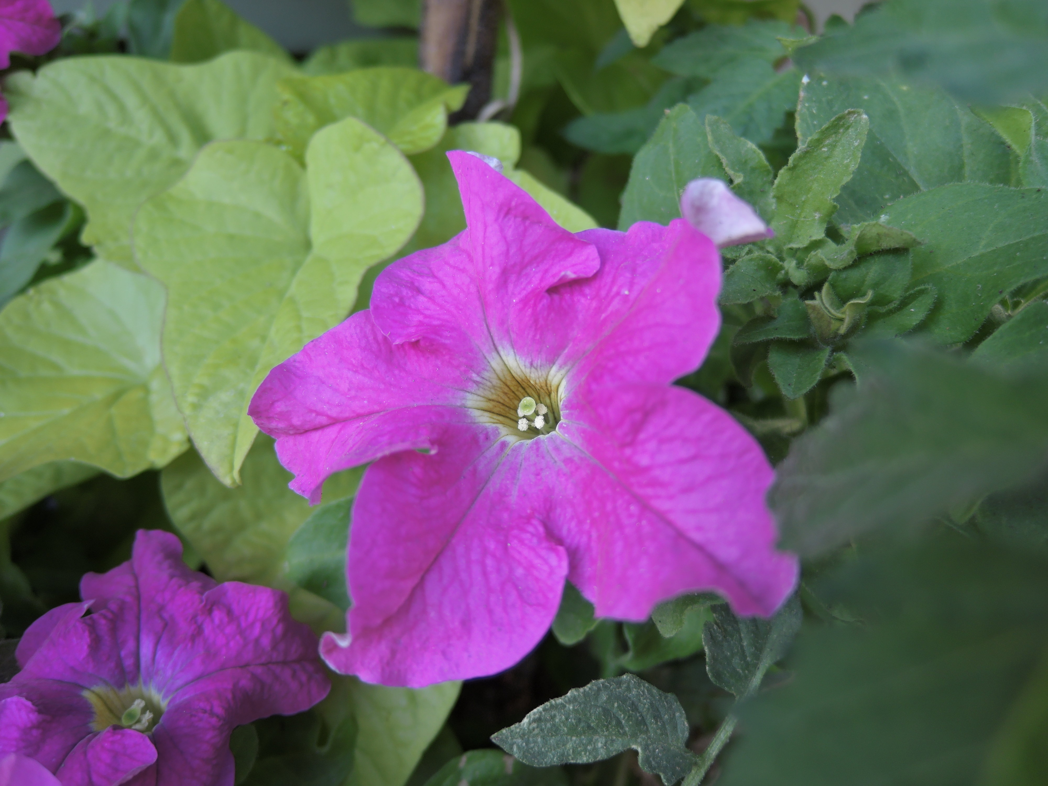 A sample photo of a flower taken by the Nikon Coolpix P340.