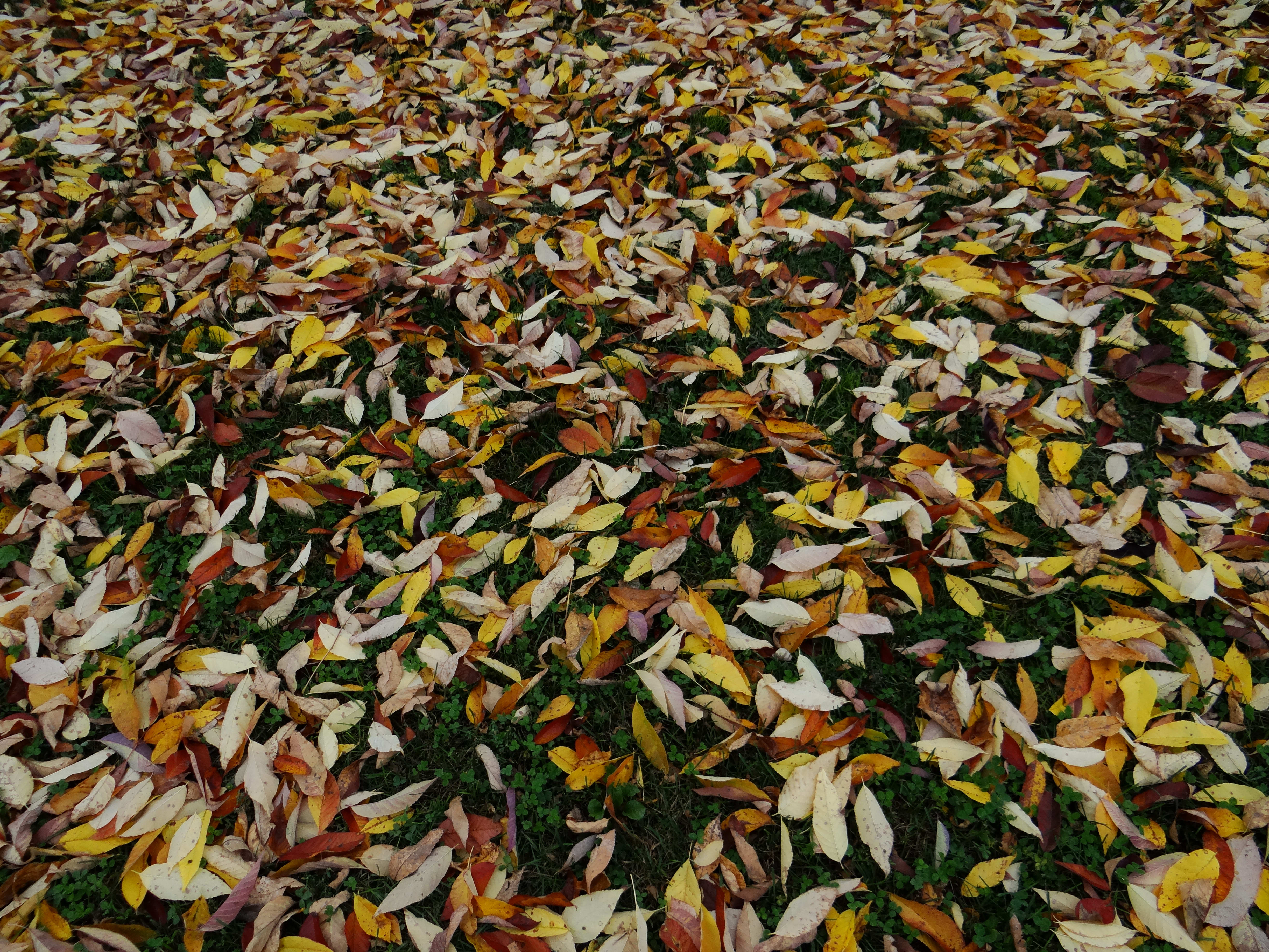Leaves Sample