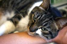 Cat on Arm