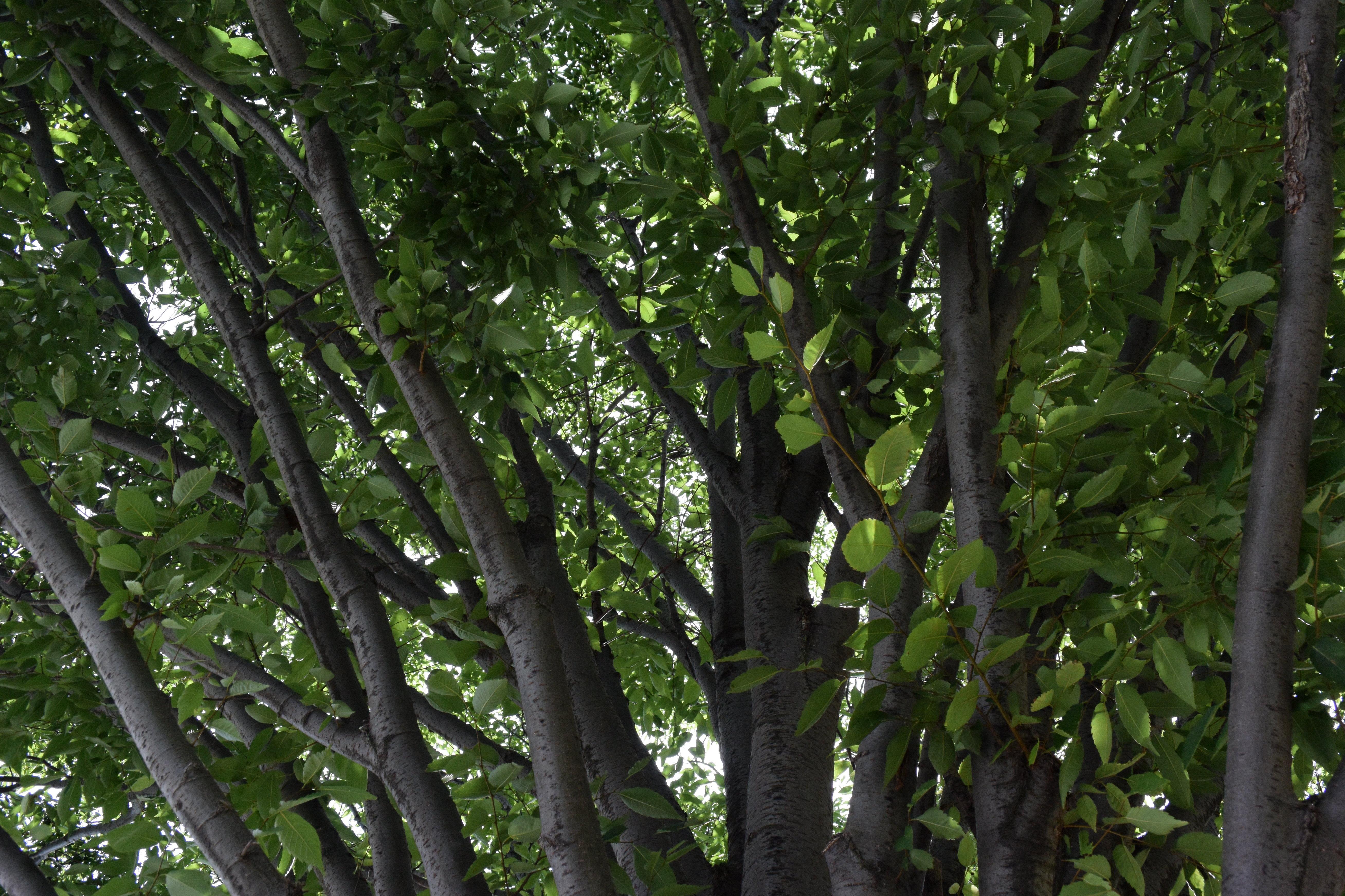 A sample image taken by the Nikon 1 J4.