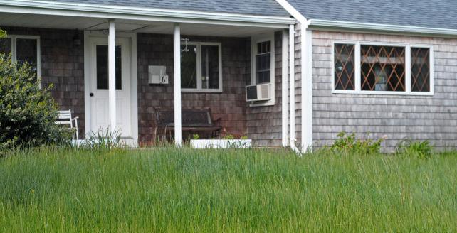 overgrown-lawn.jpg