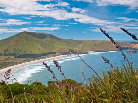 Austr NZ 3.jpg
