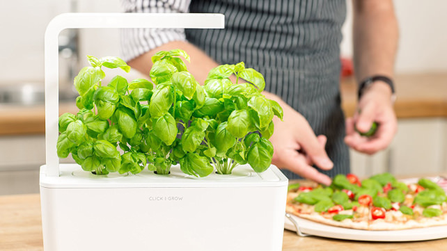Click-and-Grow Self Watering Planter