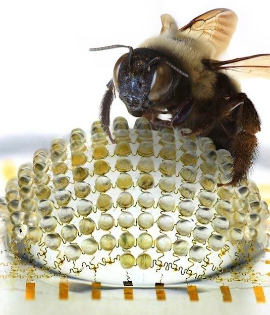 Bee comparison