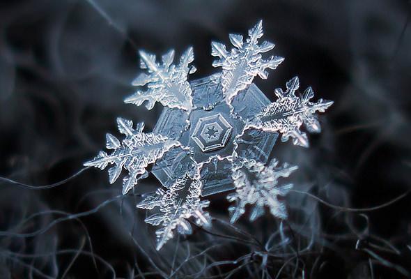 snowflakeB_web.jpg