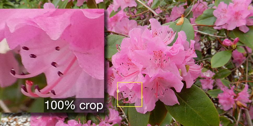 Sample crop