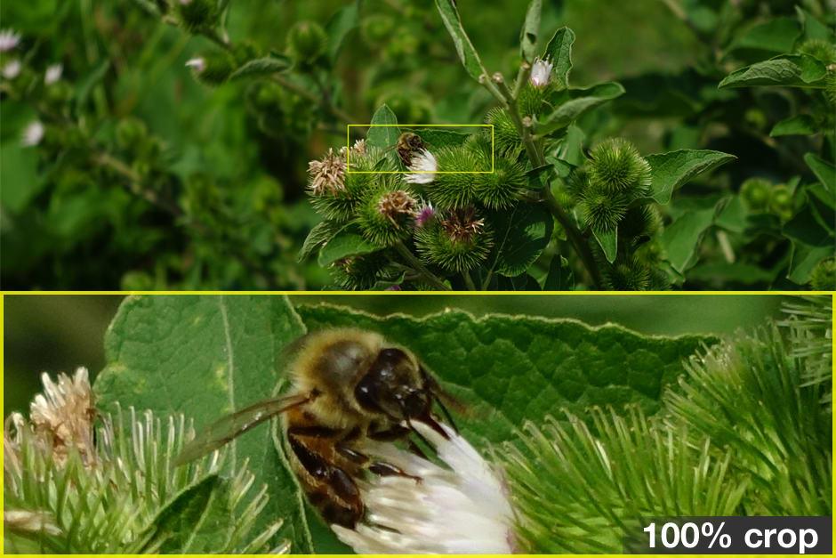 sony-rx100iii-review-science-crop.jpg